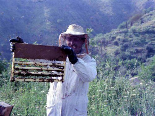 Messina, Chi ha messo in ginocchio l'apicoltura