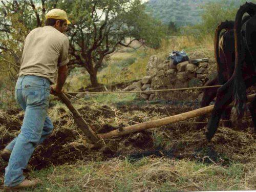 Dialetto e Cultura materiale alle Isole Eolie: Due inchieste a confronto 1928-1929 /1997