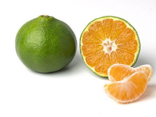 È tempo di Miyagawa, il mandarino verde di Oranzfrizer